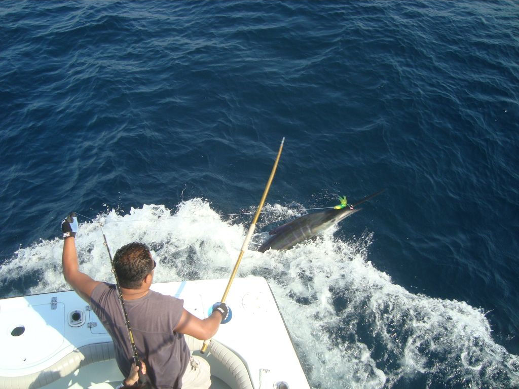 Jamaican sport fishing contact us for chartered trips for What is deep sea fishing